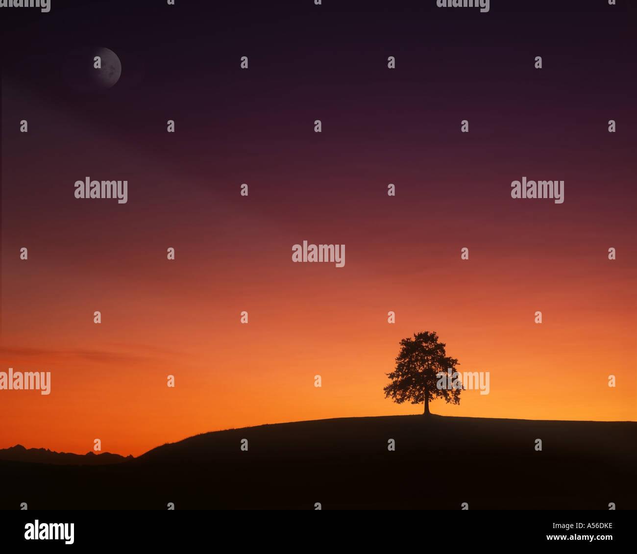 De - Bayern: einsamer Baum bei Sonnenuntergang Stockbild