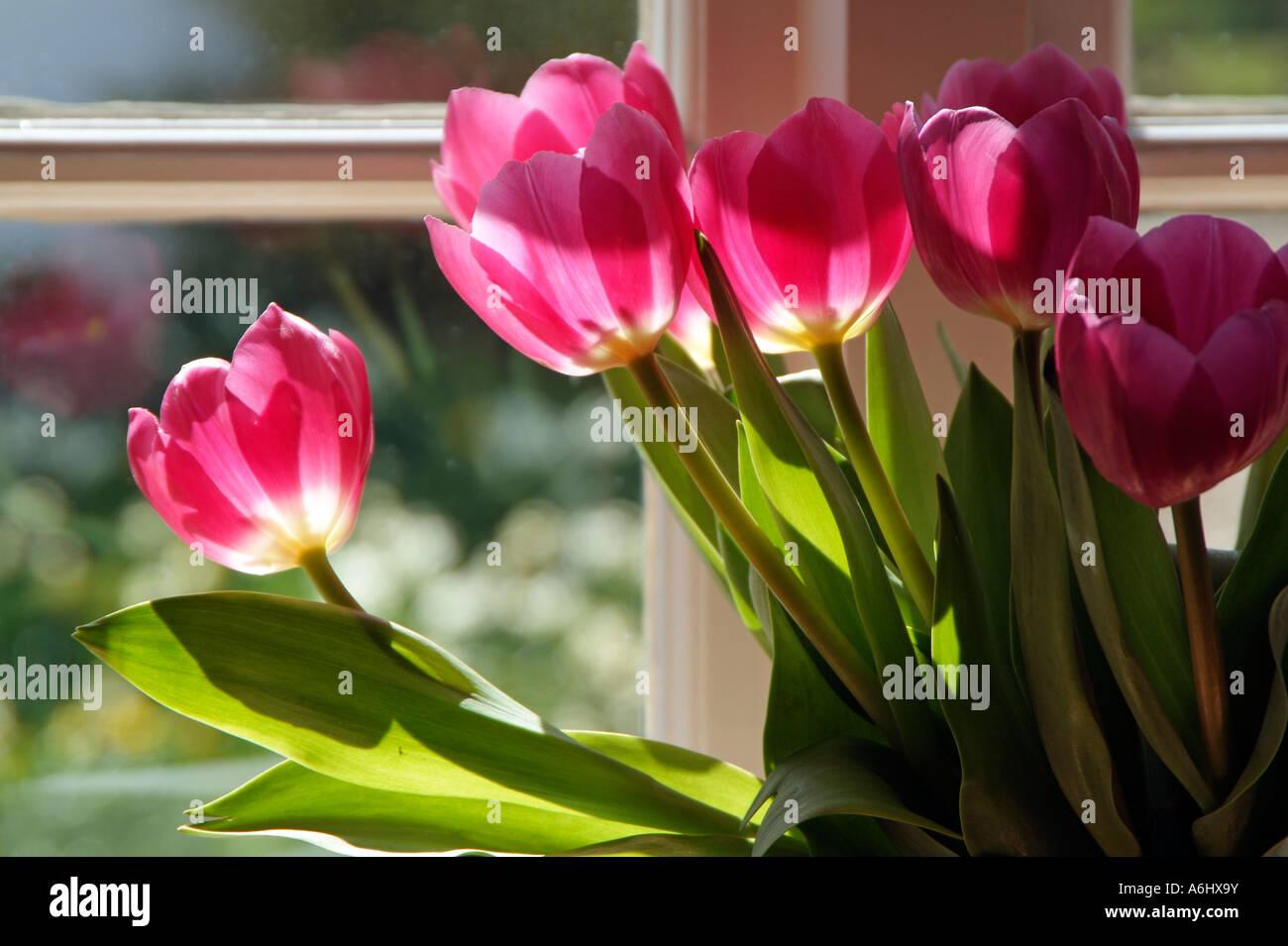 Tulpen in einer vase auf fensterbank oder fenster - Fensterbank englisch ...
