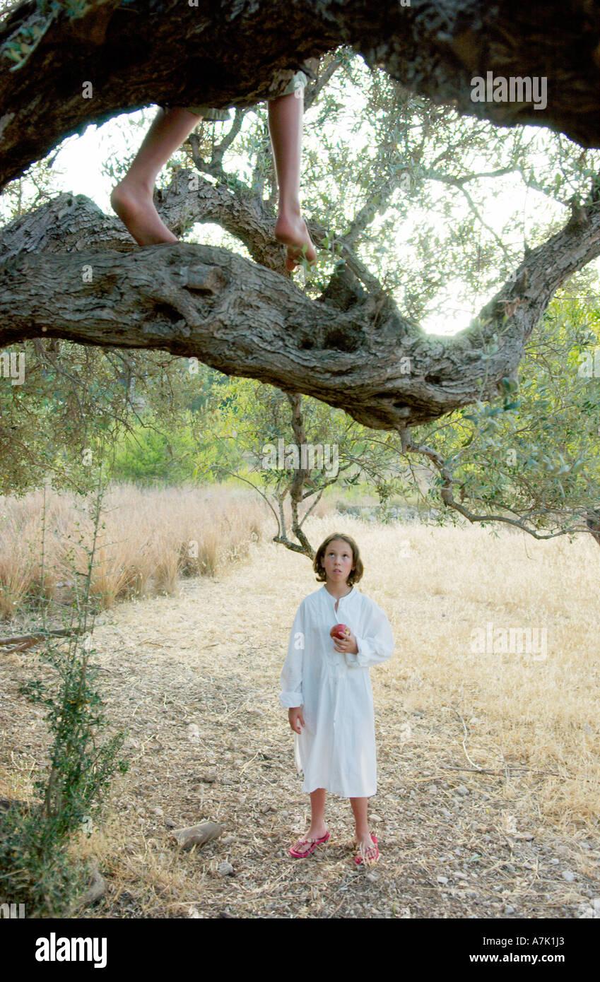 Junge im Baum, Mädchen im Feld Stockfoto
