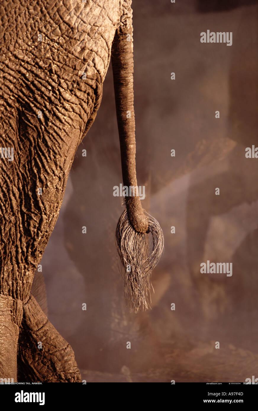 Elefanten tail Stockbild