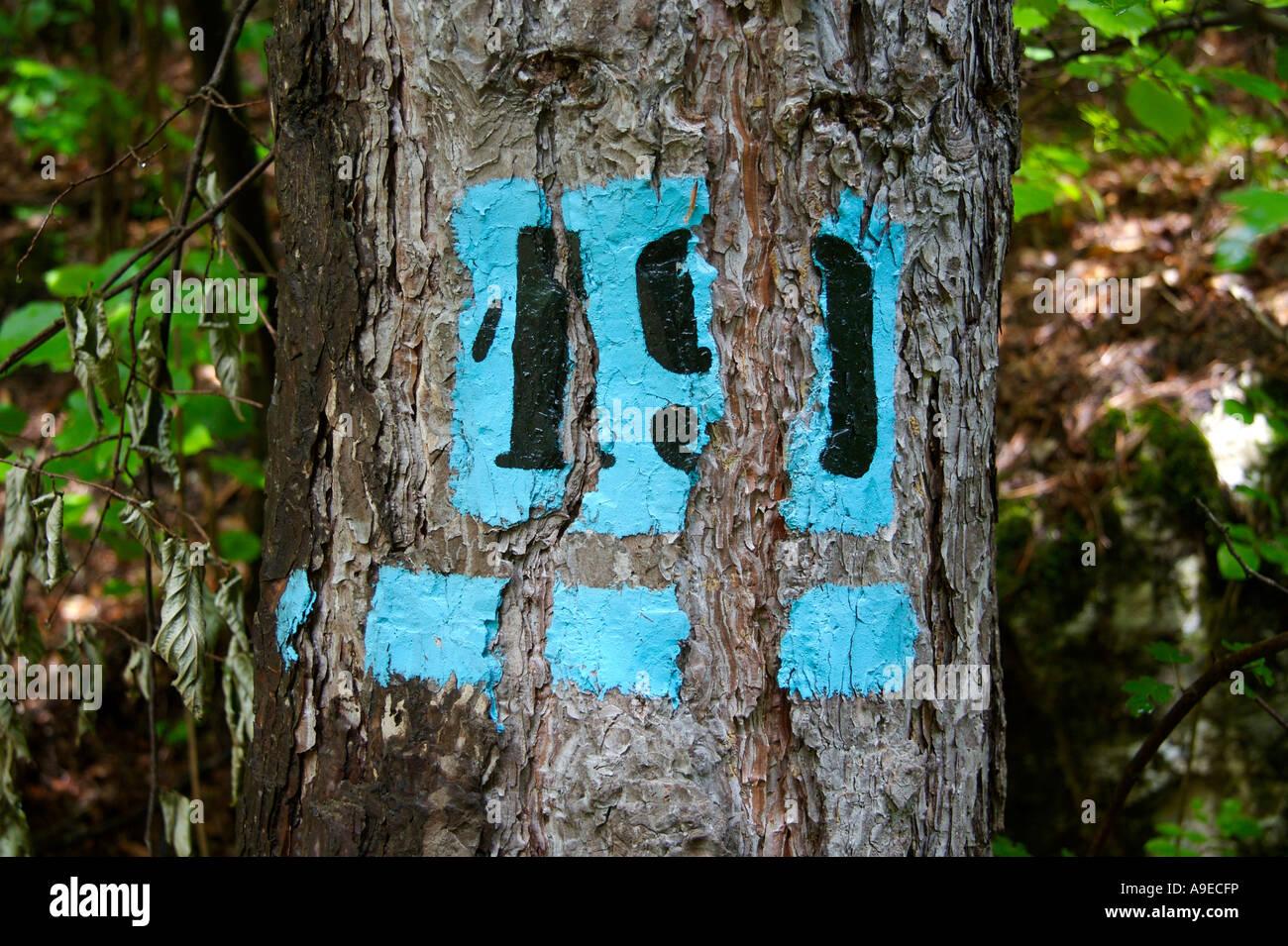 Alter Baum unterzeichnet mit Nummer 19 Stockbild