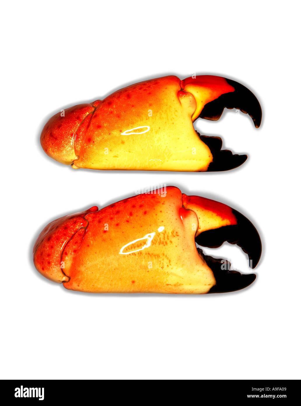 zwei Krabben auf weißem Hintergrund Stockbild