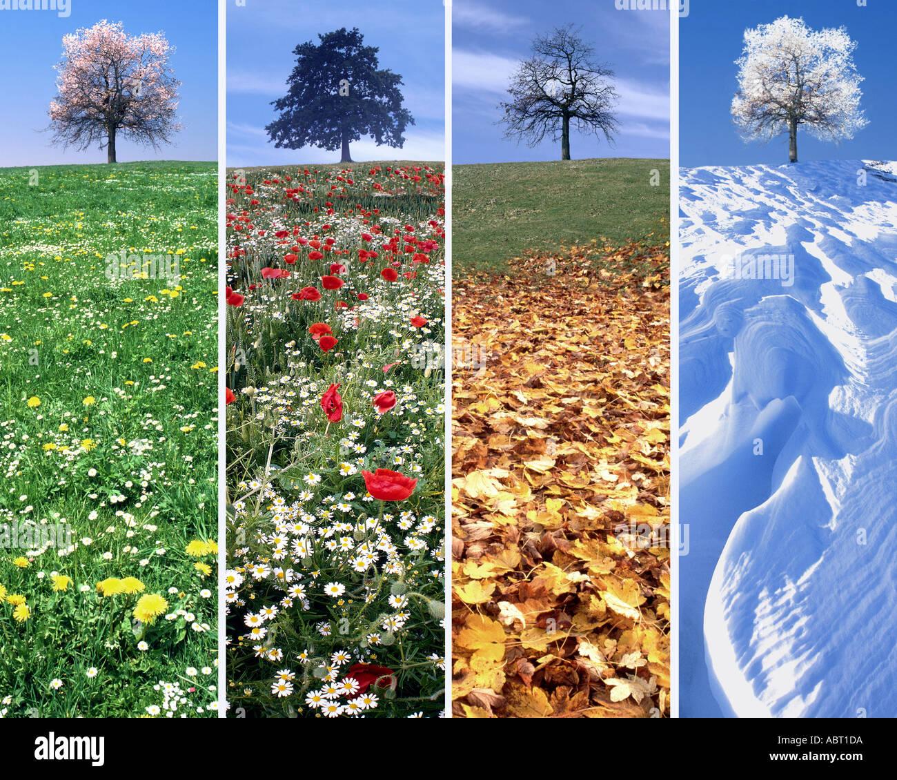 DIGITALE Kunst: Die vier Jahreszeiten Stockbild