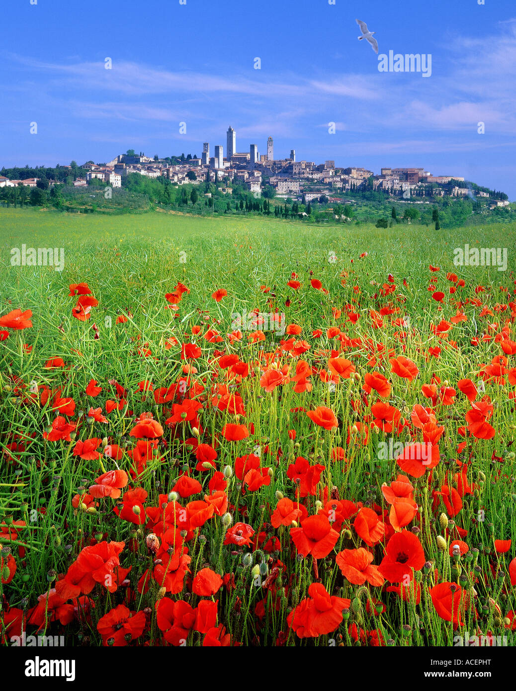 IT - TUSCANY: Historische Stadt San Gimignano Stockbild