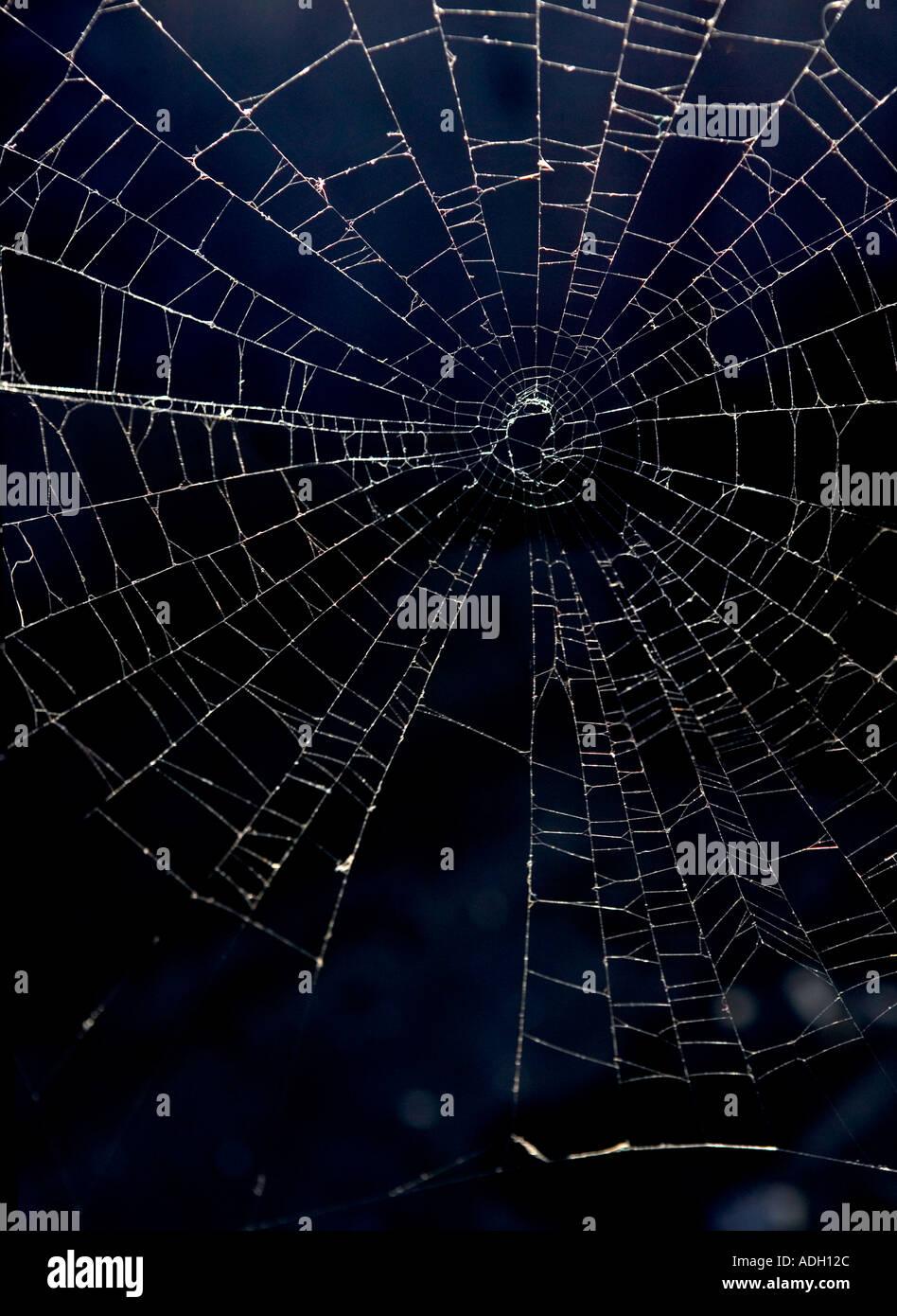 Eine komplizierte Spinnennetz Stockbild