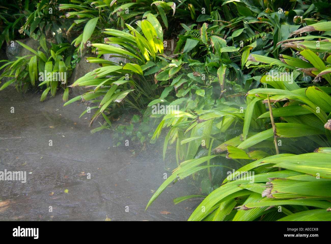 Sprinkler Beregnung Bewässerung Bewässerung Wasser H2O Stockbild