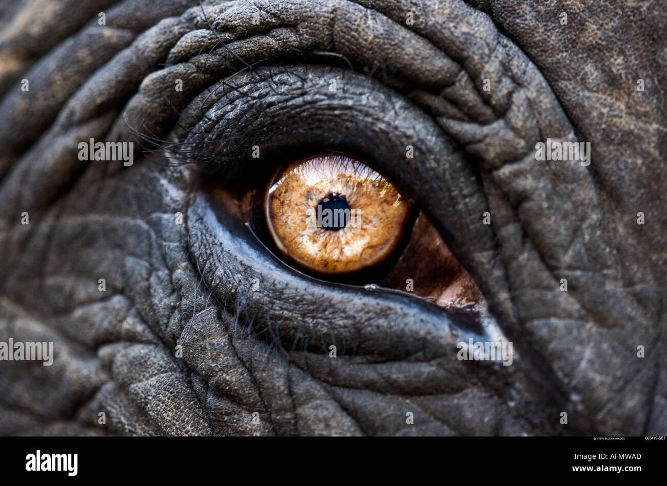 Nahaufnahme des Auges eines indischen Elefanten Jaipur Indien Stockbild