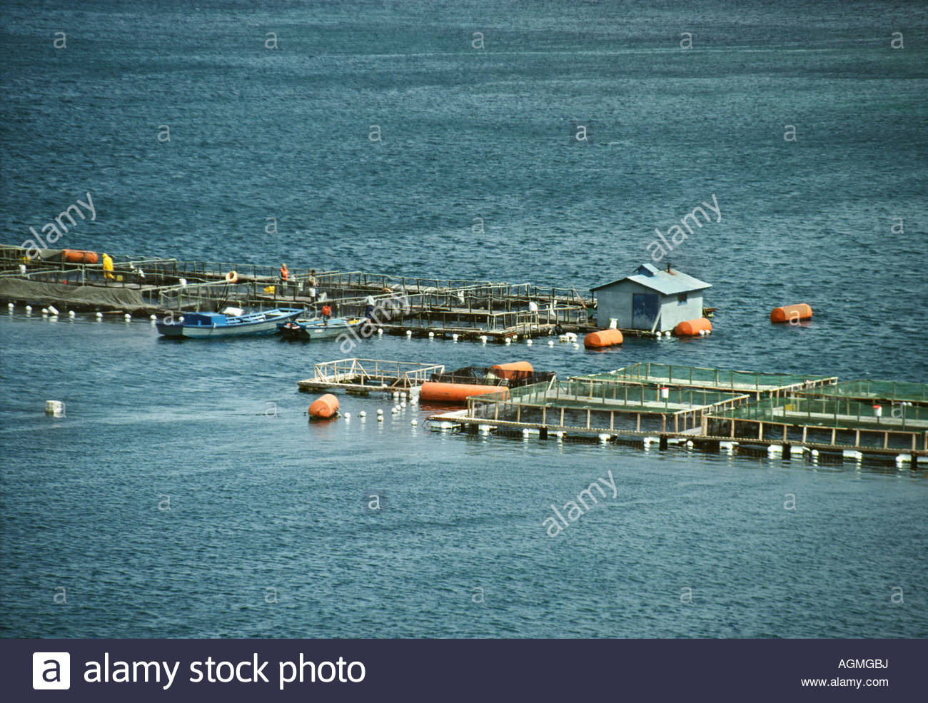 Chile, Castro, Chiloé Insel Lachsindustrie Stockbild