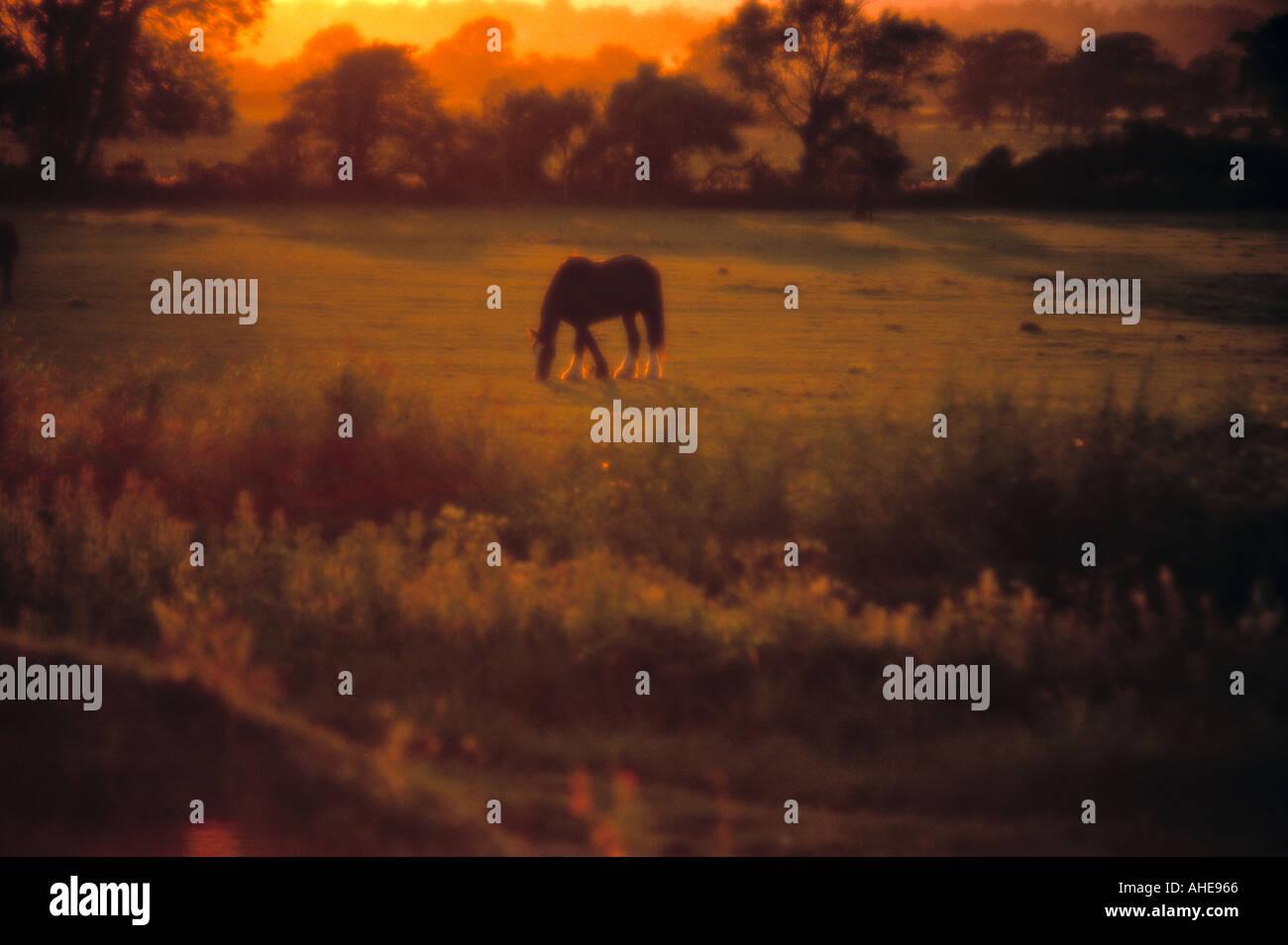 Pferd im Feld, East Sussex, England Stockbild
