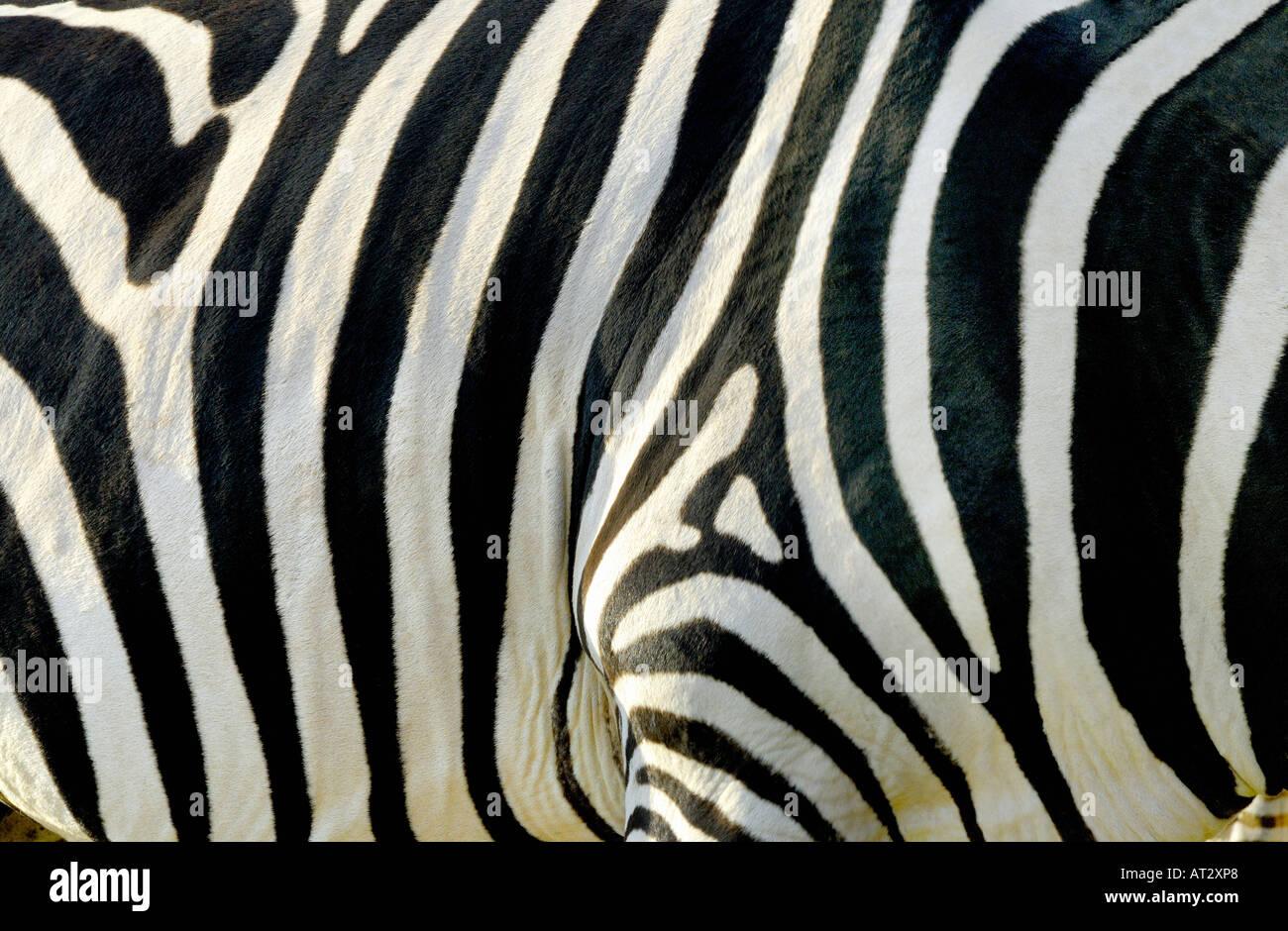 ZEBRA-STREIFEN-MUSTER Stockbild
