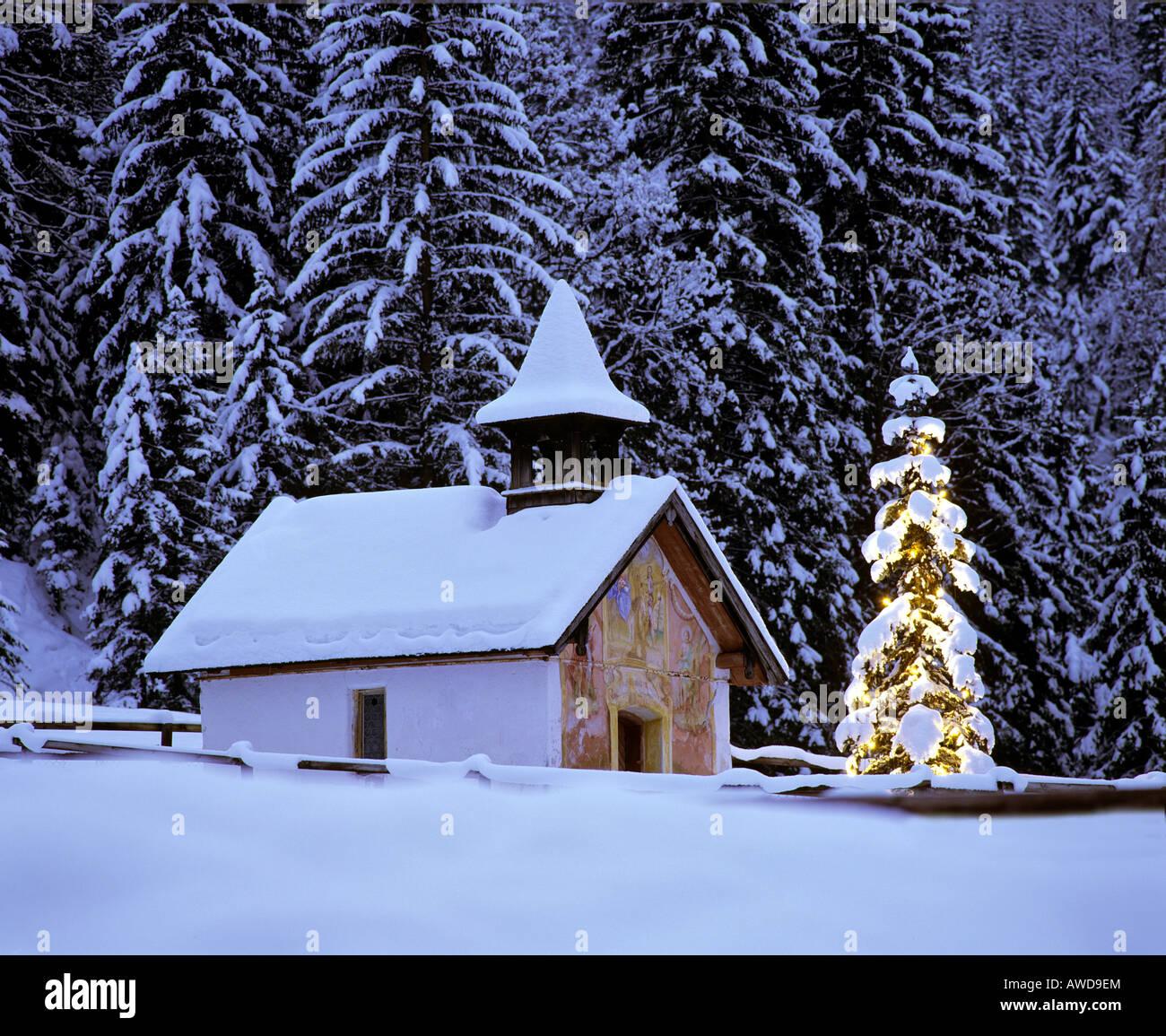 winter forest christmas tree evening christmas stockfotos. Black Bedroom Furniture Sets. Home Design Ideas