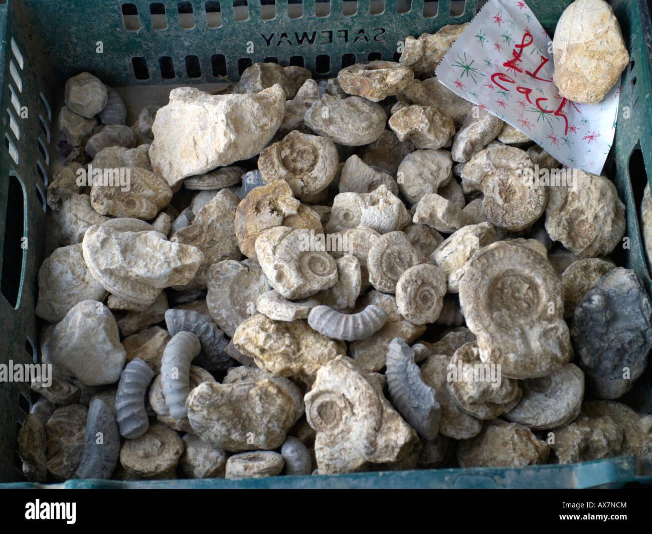 Billige Fossilien Stockbild