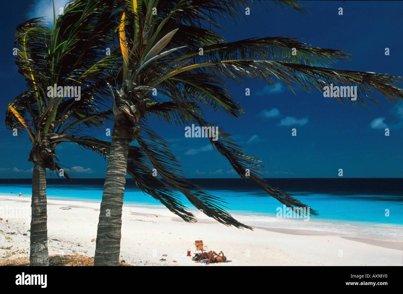Rosa Beach, Bonaire, Niederlaendische Antillen Karibik Stockbild