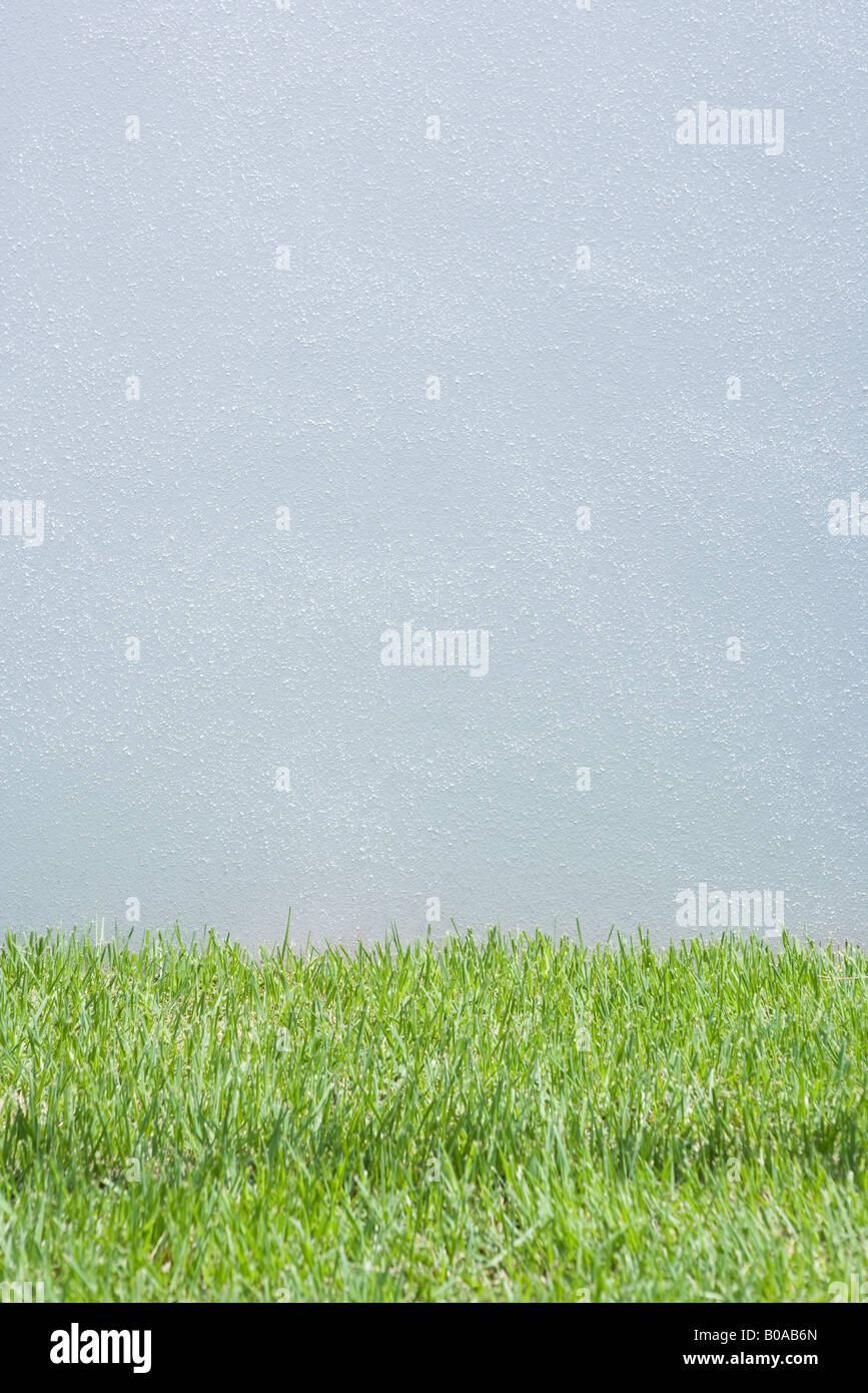 Graue Wand und grass Stockbild