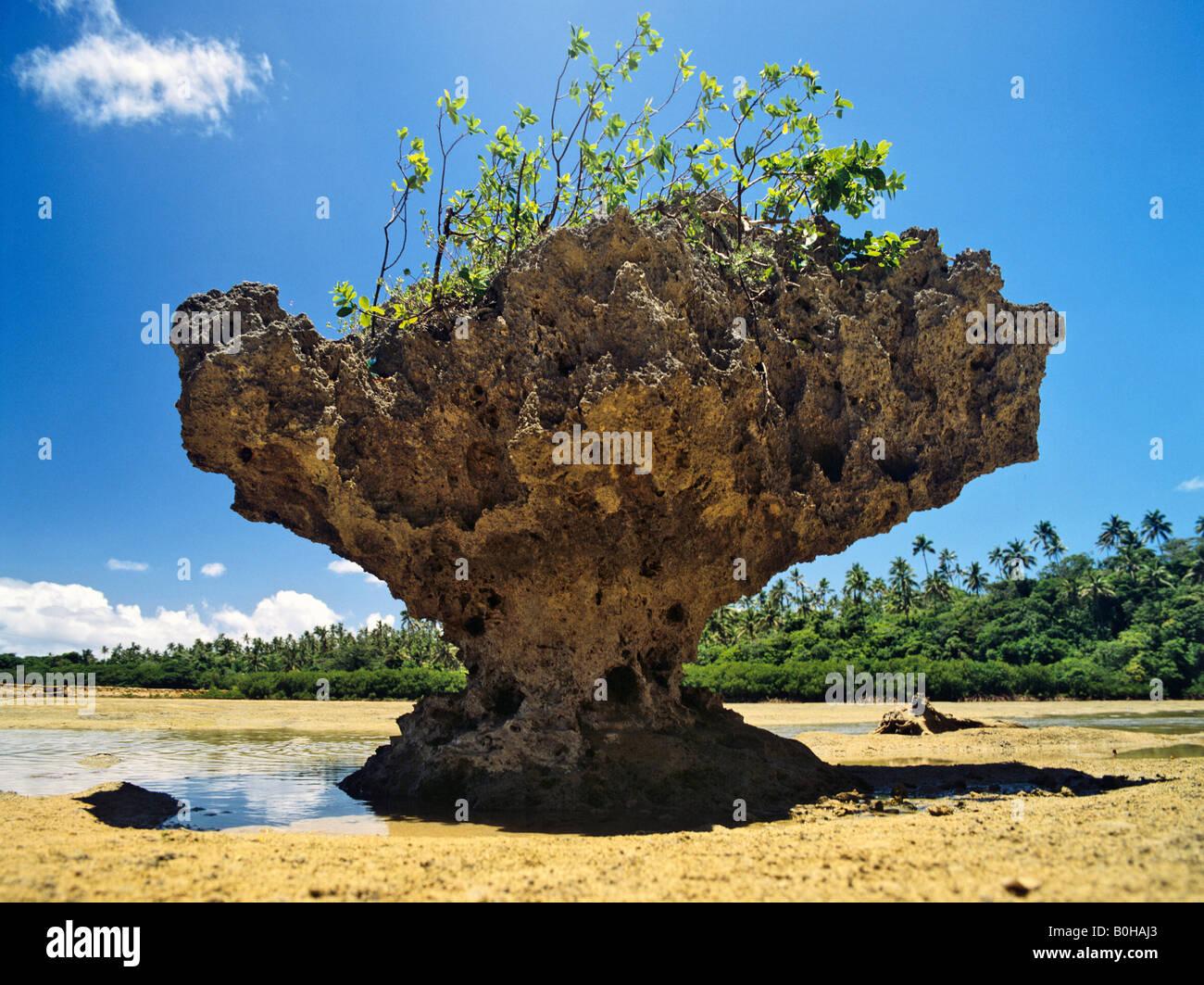 Korallen auf Va´Vau, Tonga, Südpazifik, Ozeanien Stockbild
