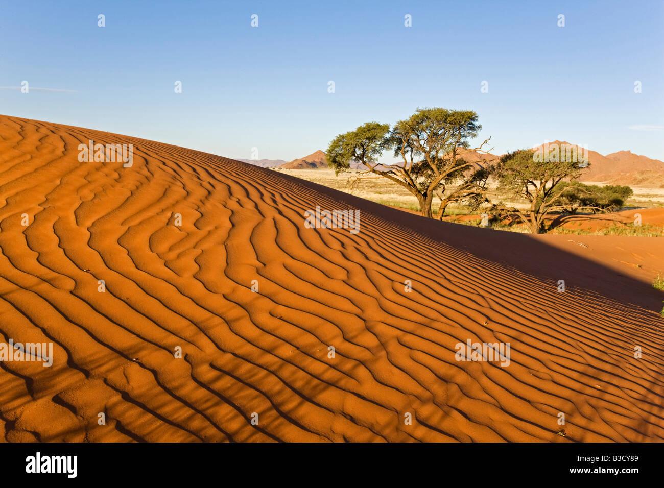 Afrika, Namibia, Namib-Wüste-Düne und Baum Stockbild