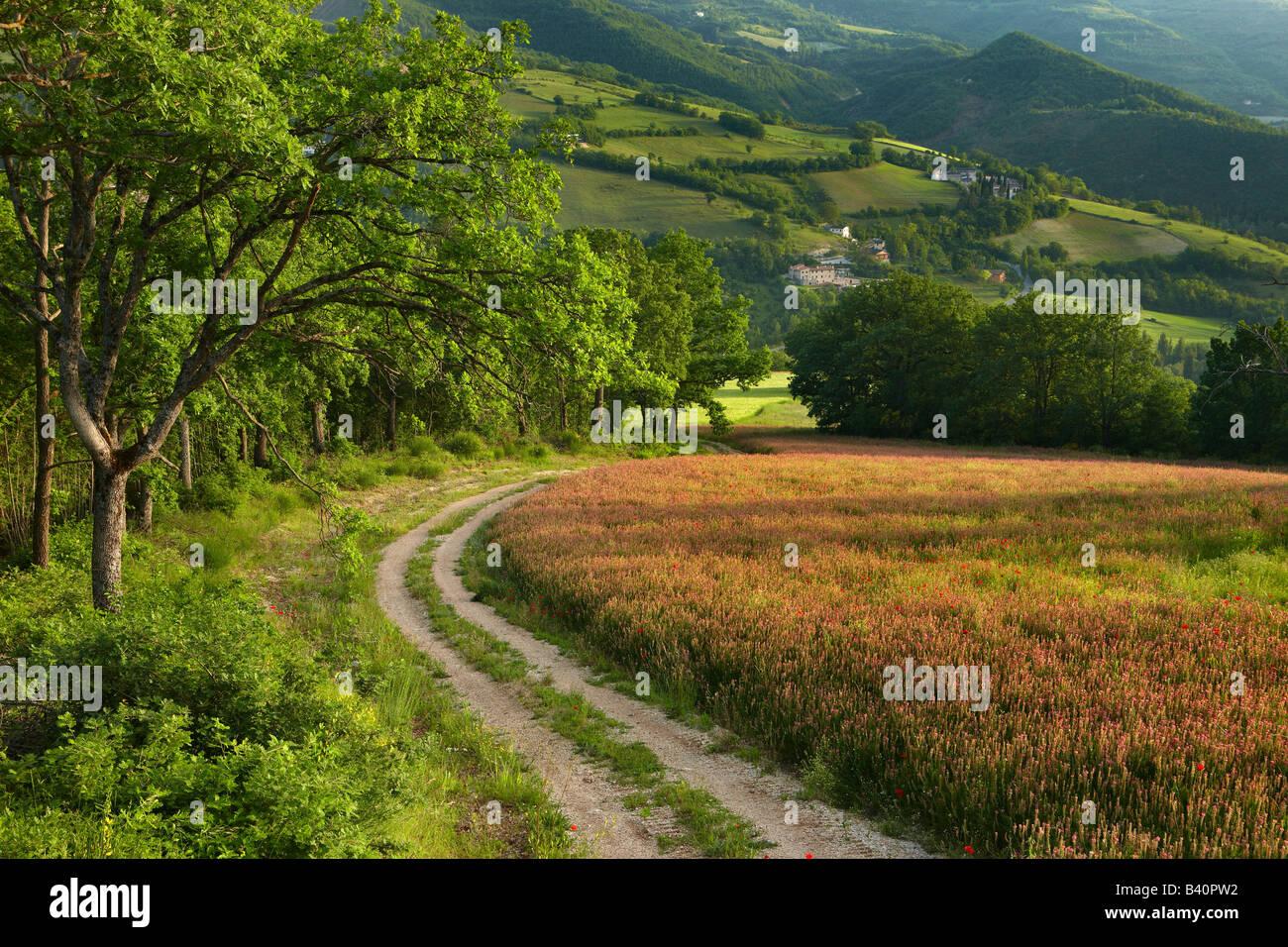 ein Feldweg durch Felder von Frühlingsblumen in der Valnerina nahe Preci, Umbrien, Italien Stockbild