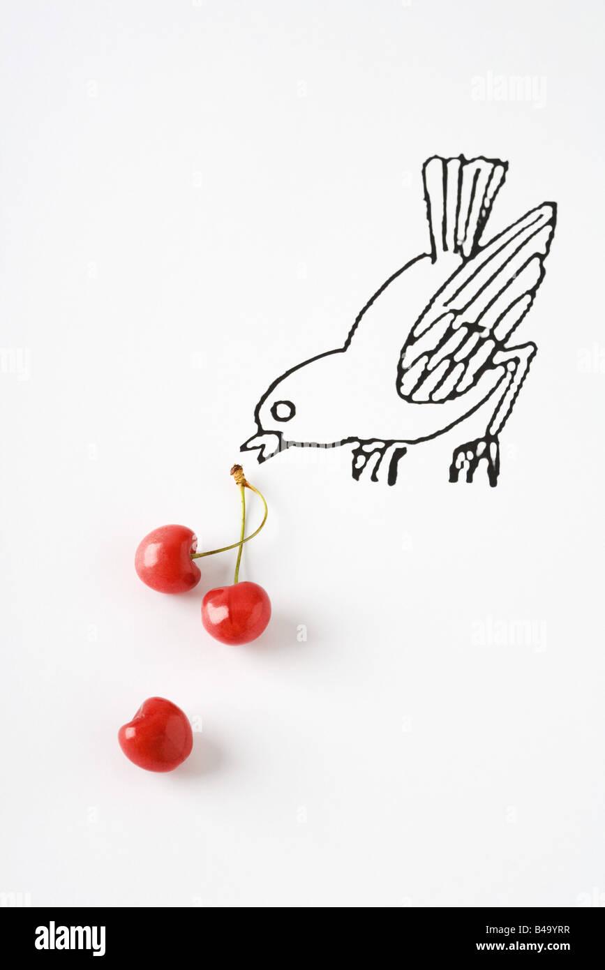 Reife Kirschen und Zeichnung des Vogels Stockbild