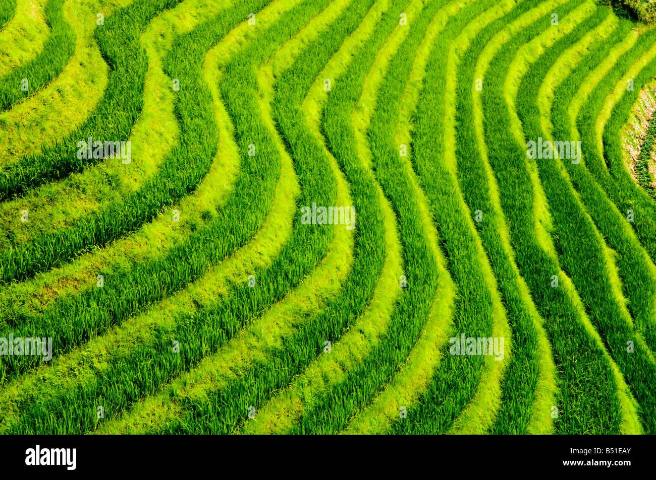 Die erstaunliche Reisterrassen bei langen Ji, Guangxi Stockfoto