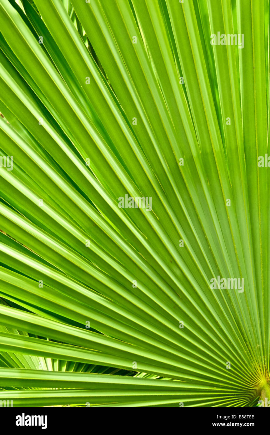 Tropische Pflanze Abstraktion Stockbild
