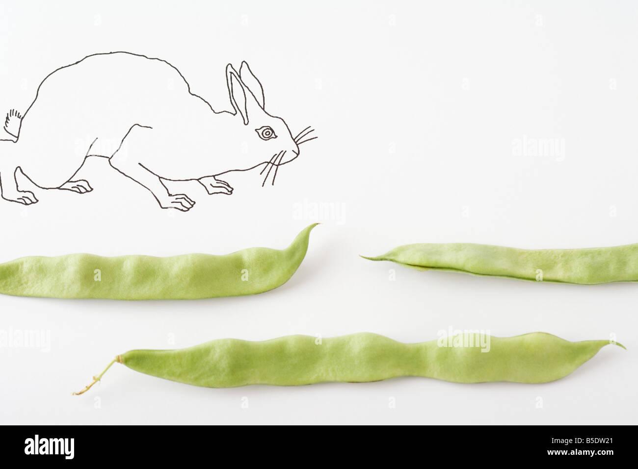 Zeichnung von Kaninchen zu Fuß über frische Erbsenschoten Stockbild