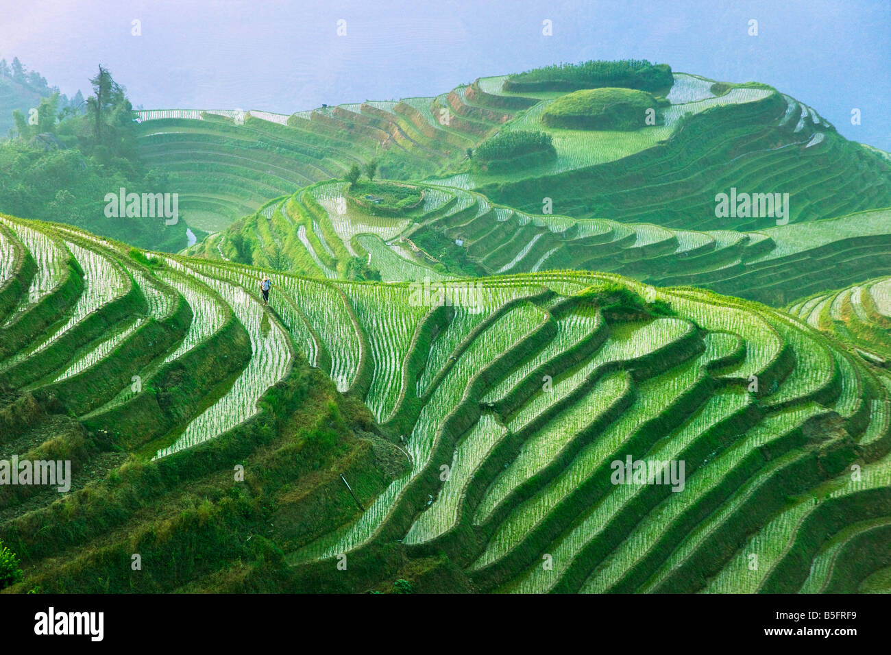 Landschaft von Reis Terrassen Longsheng Guangxi China Stockfoto