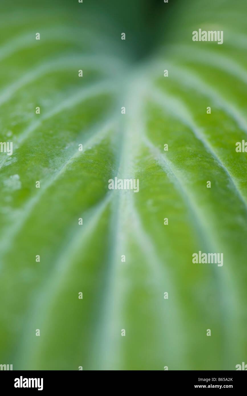 Bunte Blätter, extreme Nahaufnahme Stockbild