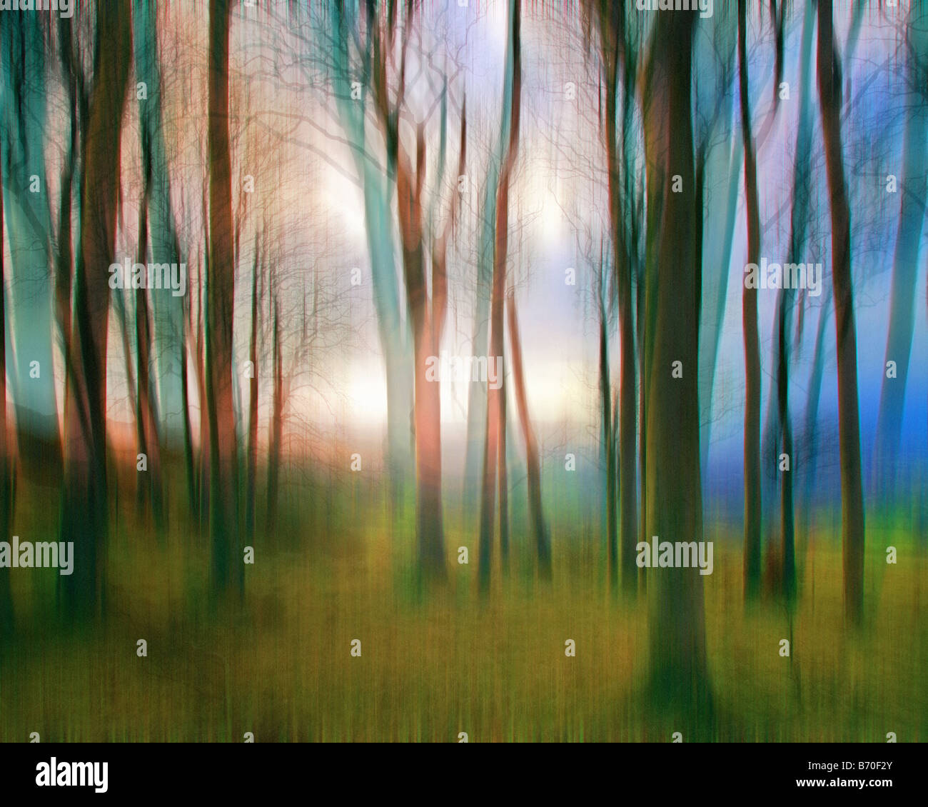 Bildende Kunst: Magic Woods Stockbild