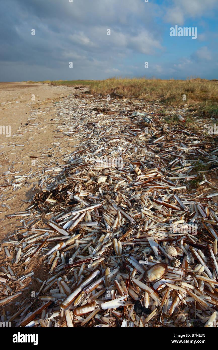 Rasiermesser Shell Wrack - Birkdale Green Beach auf der Sefton Küste, UK Stockbild