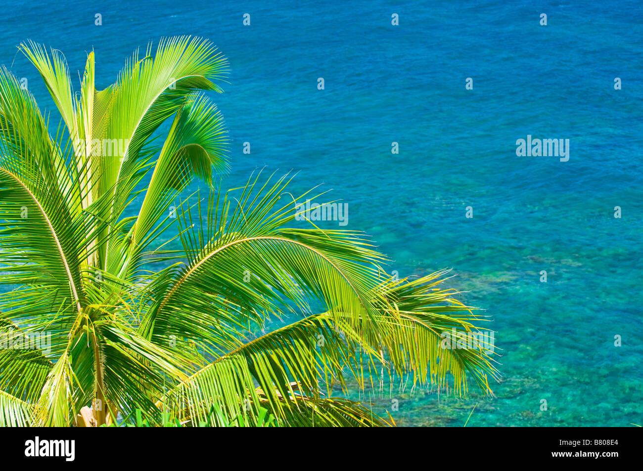Kokospalme und blauen Pazifik Wasser bei Hideaways Strand Insel Kauai Hawaii Stockbild