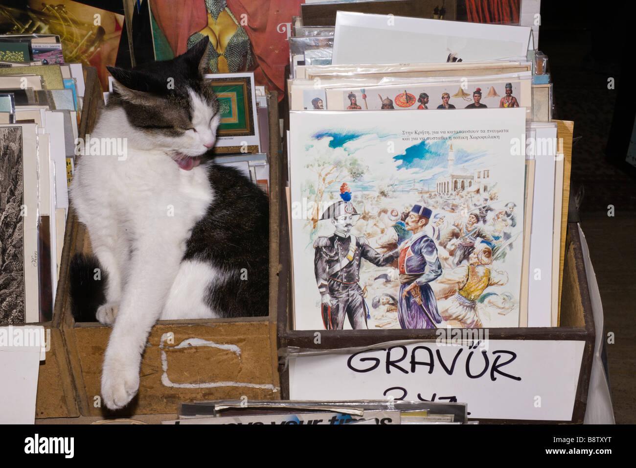 Haustier Katze im Bazar-Shop-Istanbul-Türkei Stockbild