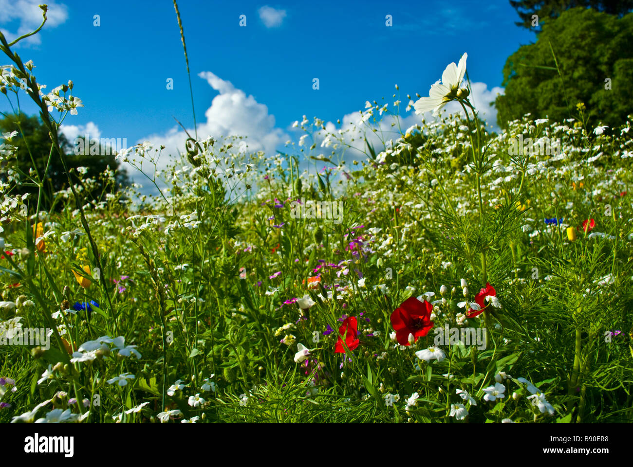 Wiese mit bunten Blumen wie Kornblumen Kräuter und blauer Himmel Wolken und Bäume | Wiese Mit Farbenfrohen Stockbild