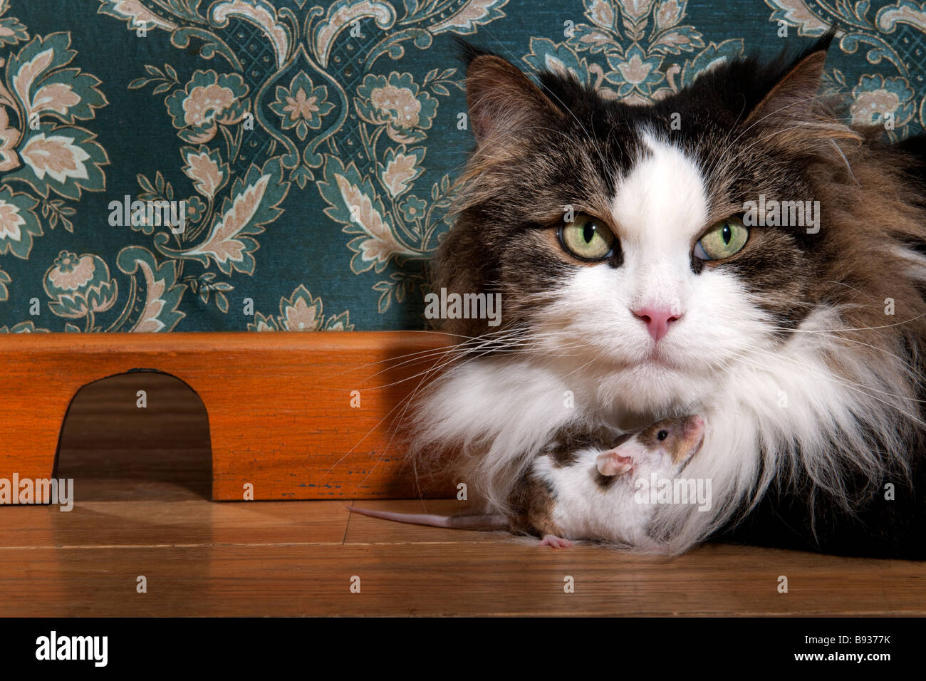 Katze und Maus in einem luxuriösen alte altmodische Zimmer Stockbild
