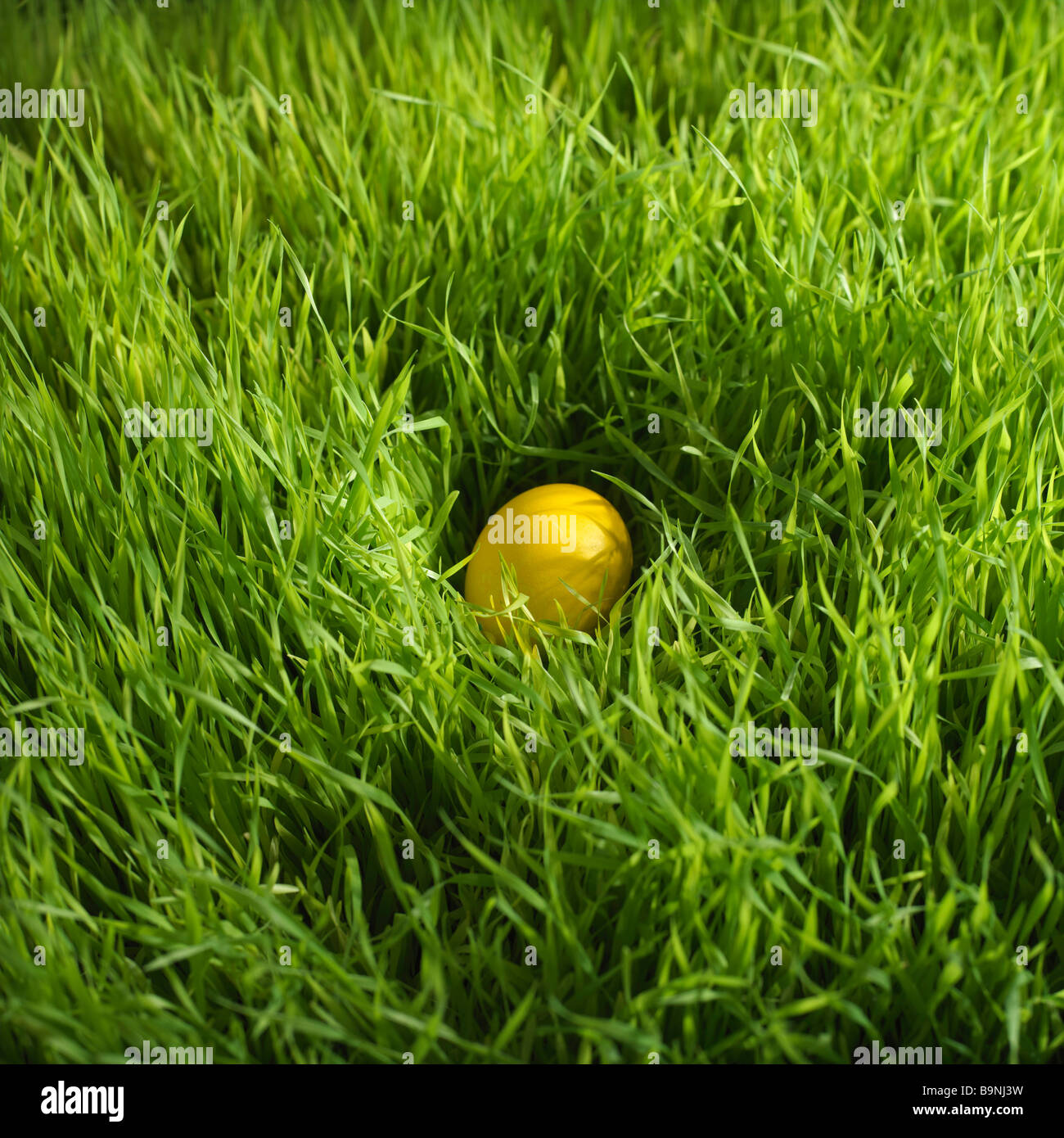farbige Osterei versteckt in Rasen Stockbild