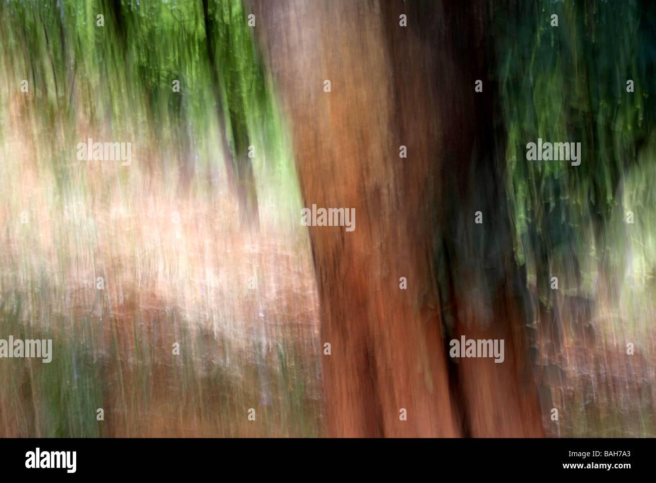 Objektiv blur natürliche unscharfen Hintergrund Stockbild