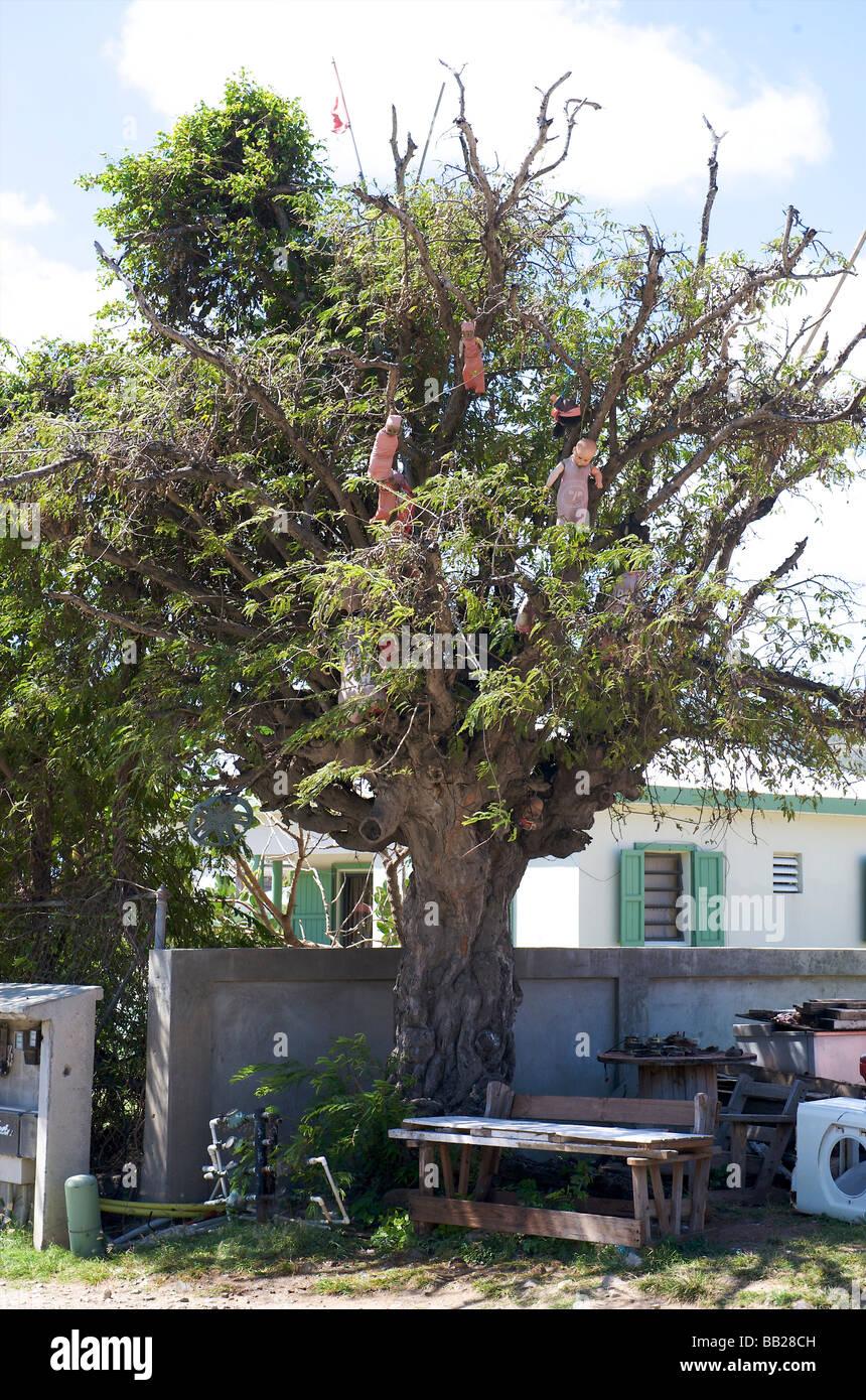 Antillen Antillen Bovenwinden Bovenwindse Karibik Tag tagsüber niederländischen Eiland Eilanden Französisch Stockbild