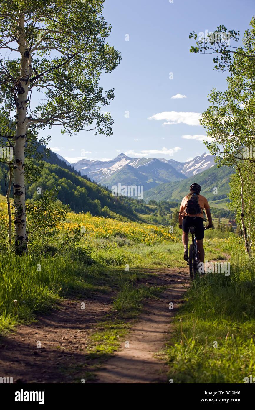 Maultier s Ohren Asteraceae Sonnenblume Familie wachsen entlang den Wald zu Fuß Trail Crested Butte Colorado Stockbild
