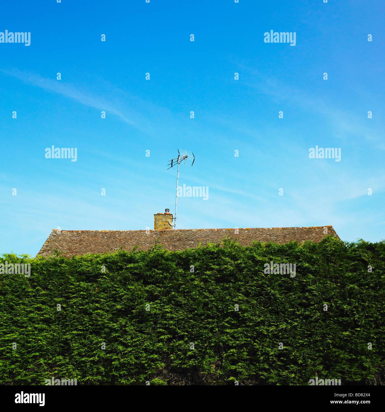 Dach und TV-Antenne versteckt hinter einer hohen Hecke. Stockbild