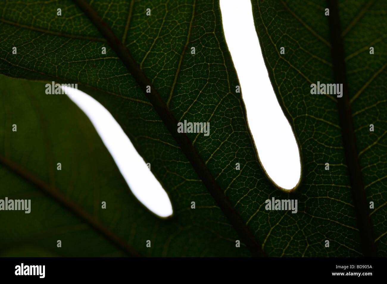 schönes Blatt in einem zeitgenössischen Stil Kunstfotografie Jane Ann Butler Fotografie JABP535 Stockfoto