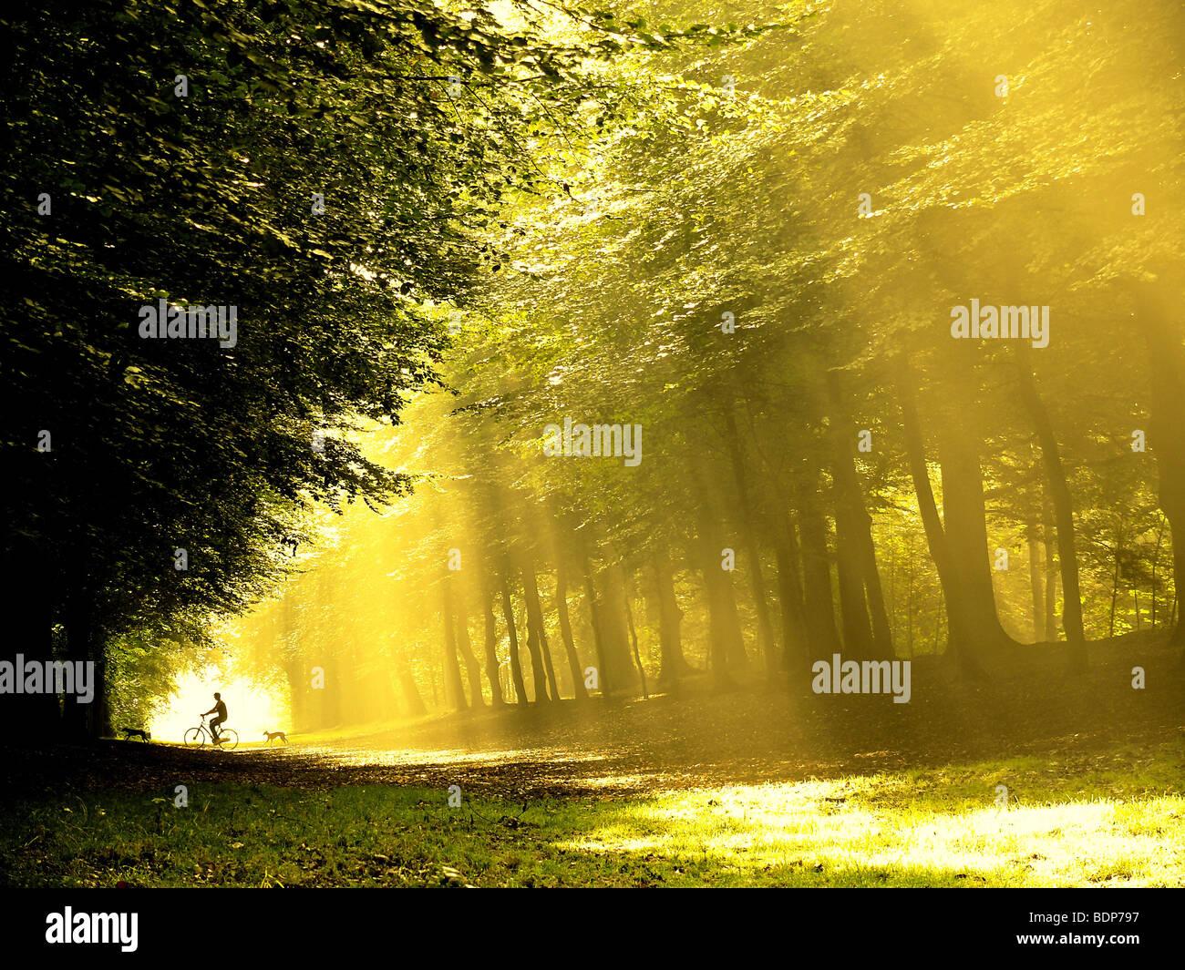 Ein einsamer Radfahrer mit Hunden im Wald mit starken Sonnenlicht auf dem Weg Stockbild