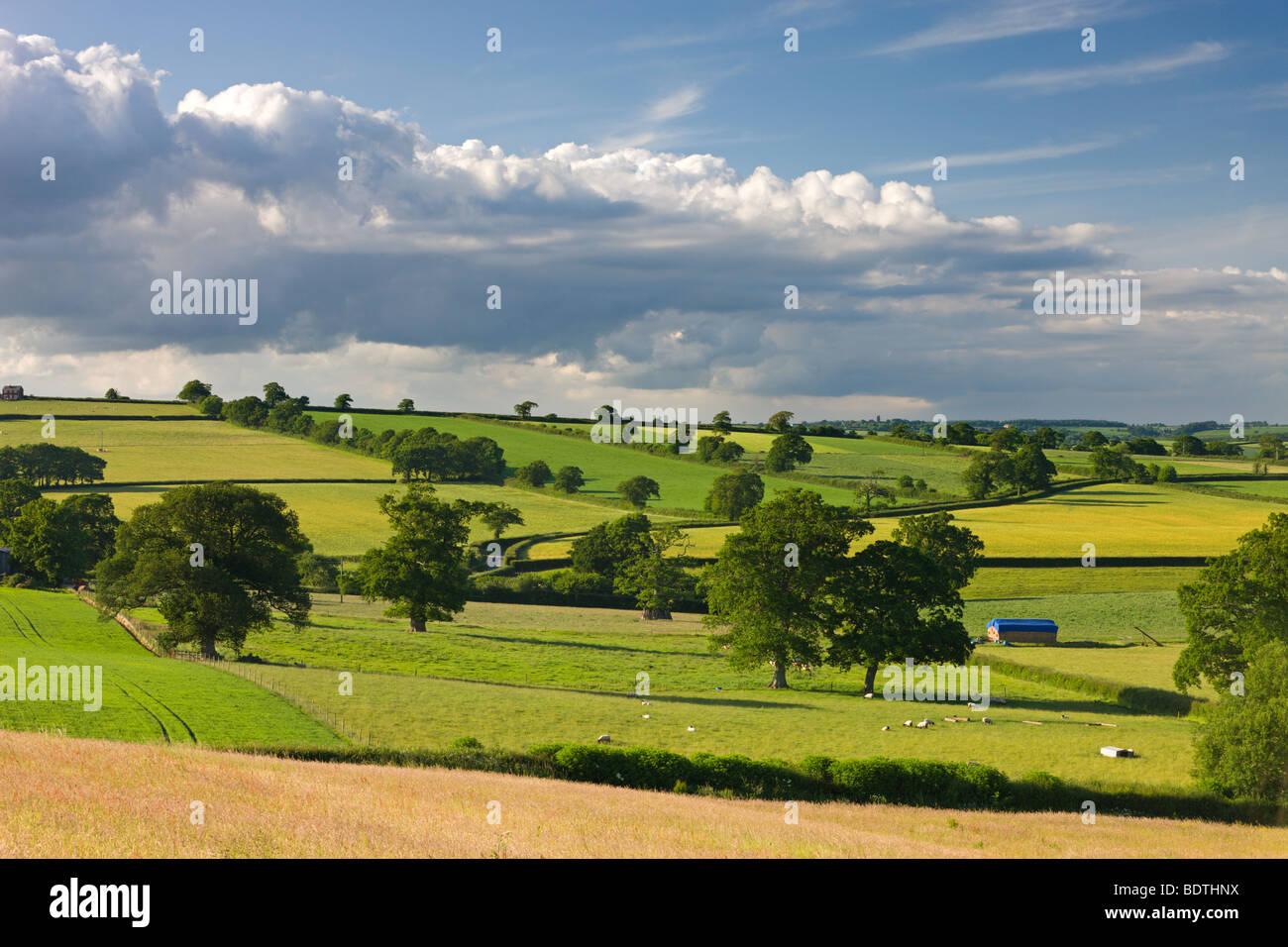 Eine hügelige Landschaft in der Nähe von Broomhill, Mitte Devon, England. Sommer (Juni) 2009 Stockbild