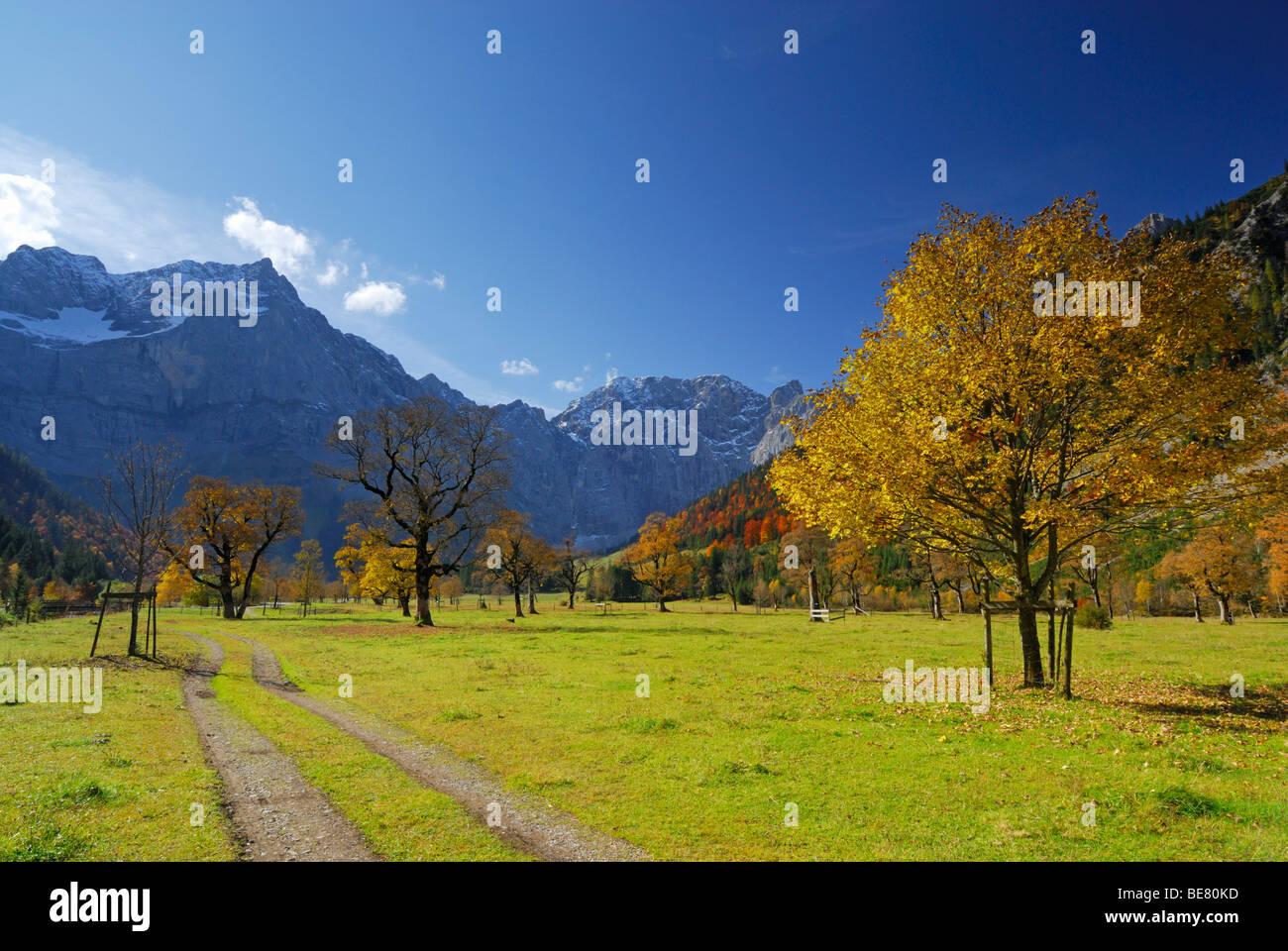 Zwischen Sie Ahornbäumen in herbstlichen Farben mit Blick auf Spritzkarspitze, Grosser Ahornboden, Karwendel, Stockbild