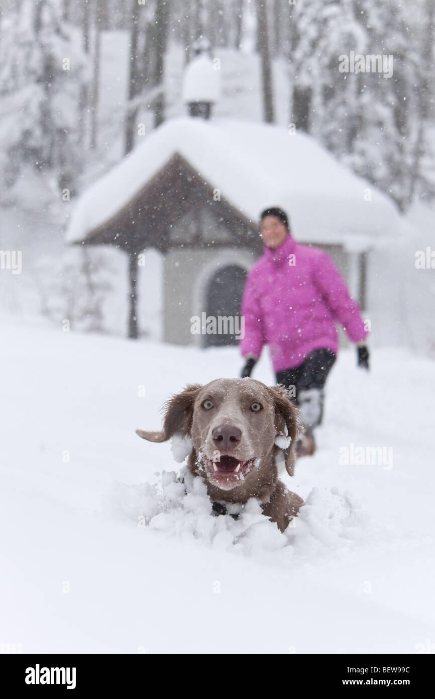 Hund, spähte aus tiefem Schnee, eine Person in den Hintergrund, Elsbethen, Salzburger Land, Österreich Stockbild