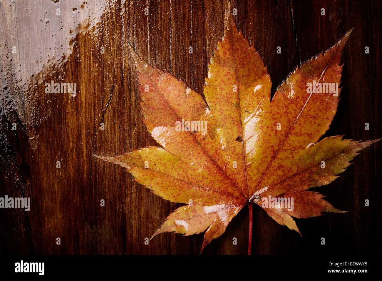 Herbst-Konzept, selektiven Fokus Mitte des Bildes, spezielle durchtrainierte Foto f / x Stockbild