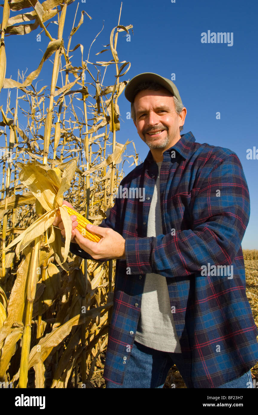 Landwirtschaft - ein Bauer stellt auf dem Gebiet während der Inspektion seiner Reife Ernte bereit Getreide Stockbild