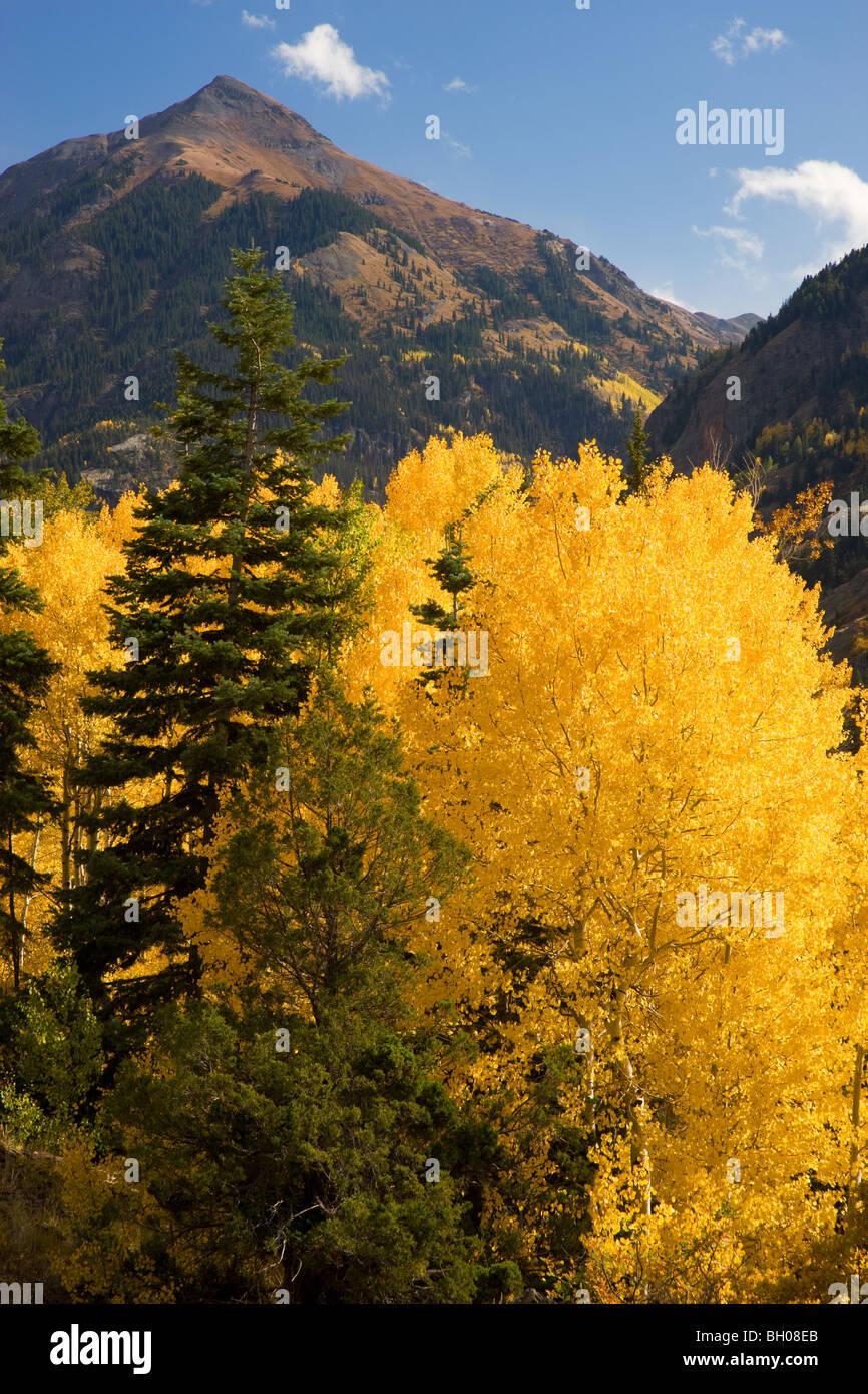 Herbst Farben in den San Juan Mountains in der Nähe von Ouray, Colorado. Stockbild