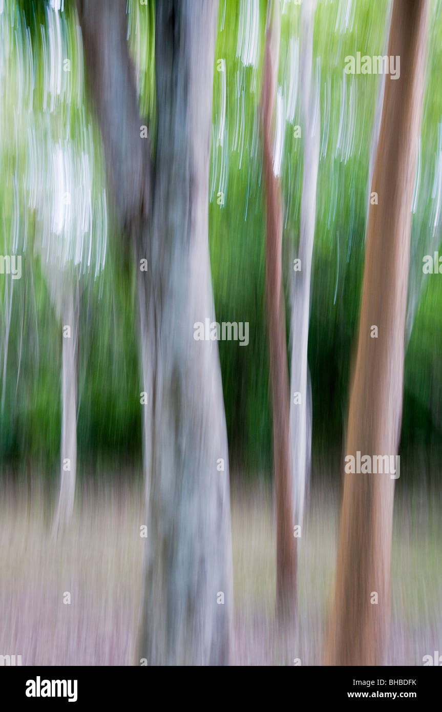 Rainforest Baum Stamm abstrakt, Calakmul Biosphere Reserve, Yucatan, Mexiko Stockbild
