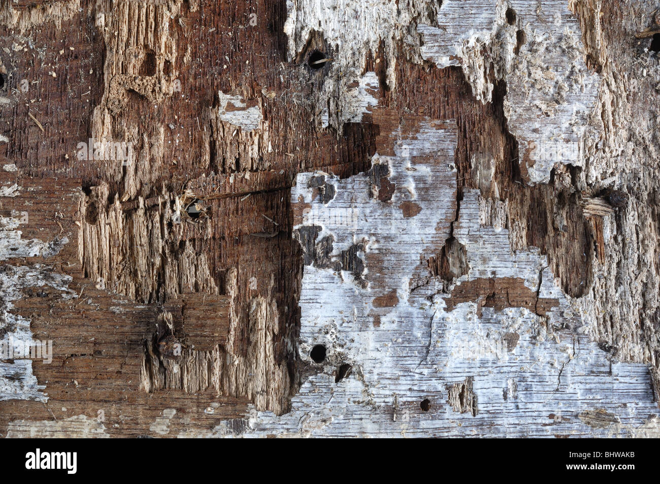 Holz Hintergrund - Johannes Gollop Stockbild