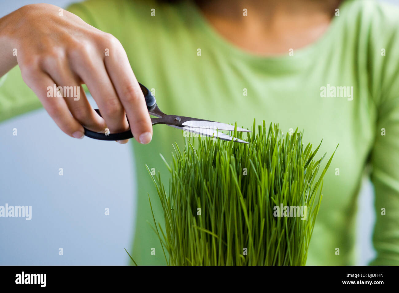 Frau Grass mit einer Schere zuschneiden. Stockbild