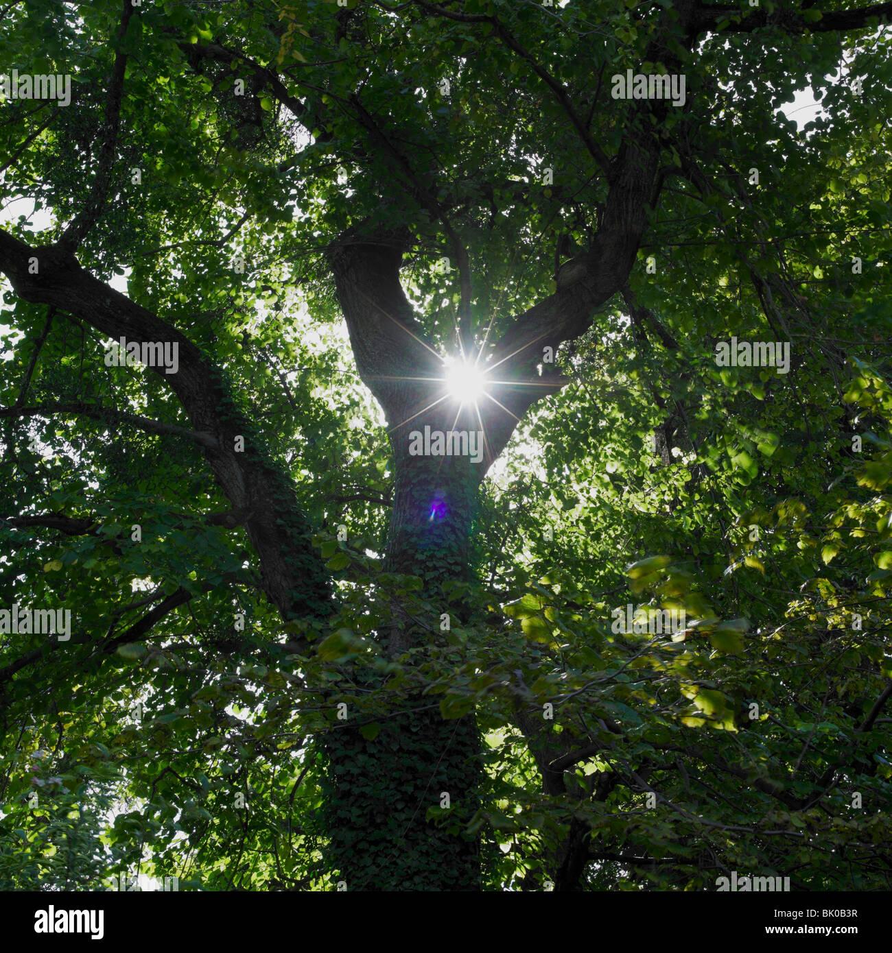 Baum Blätter Sonne shinning Trog Stockbild